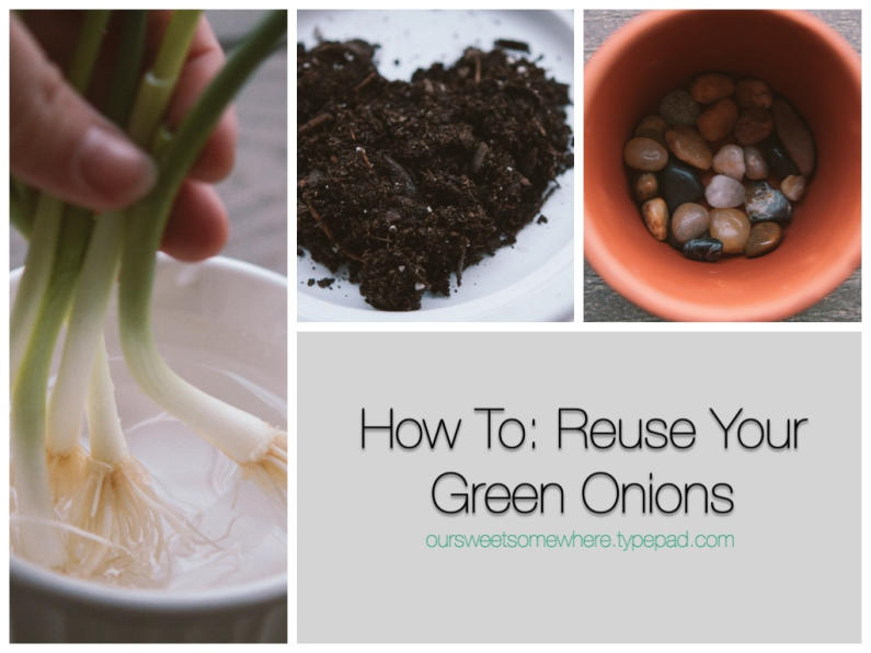 Reuse Your Green Onions | Our Sweet Somewhere