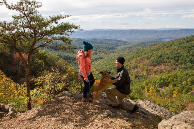 Shenandoah: Camping + Engaged