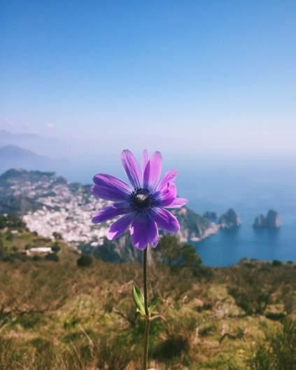 Capri I love you - OSS